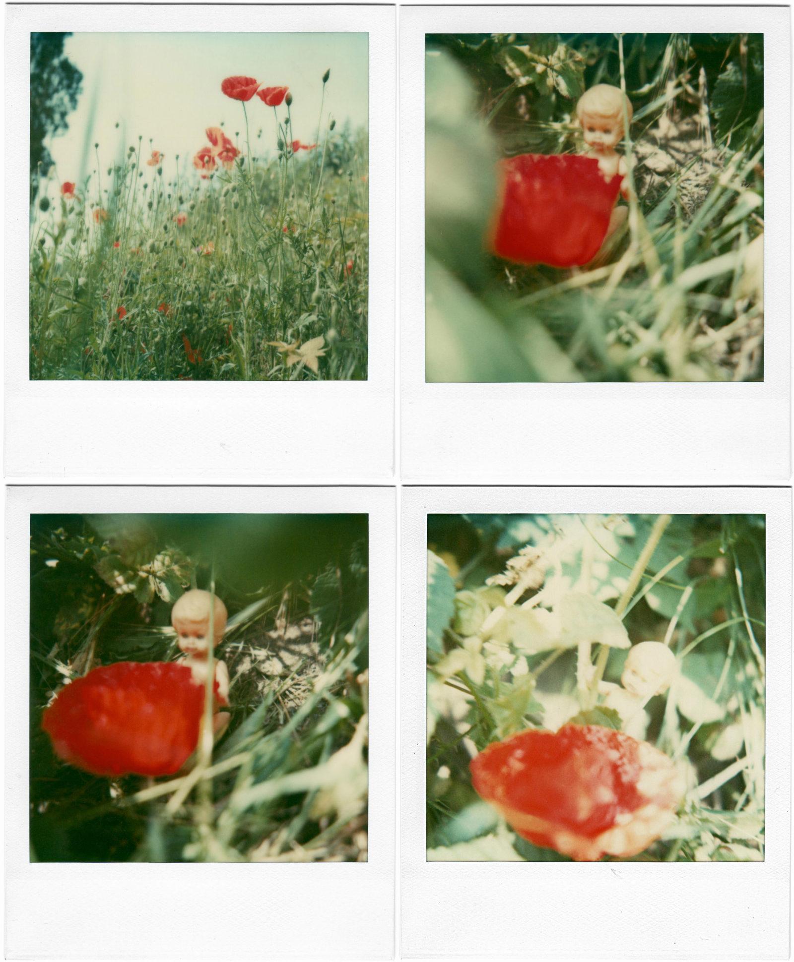 Poppy Realm