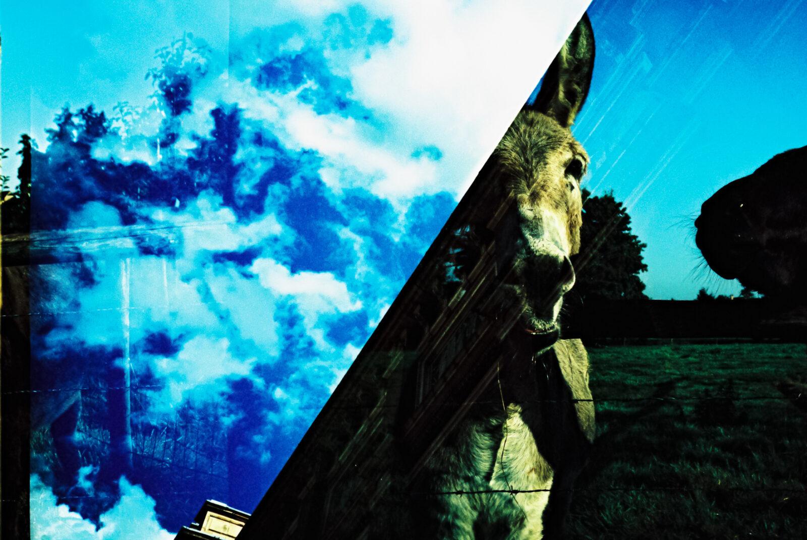 instaCDV 05 Roll4 Maya Donkey 000014